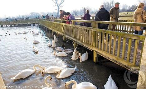 wildfowl_and_wetlands_trust_slimbridge